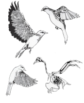Study of Birds for a bigger piece