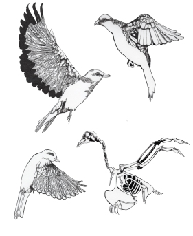 Study of Birds for a bigger piece