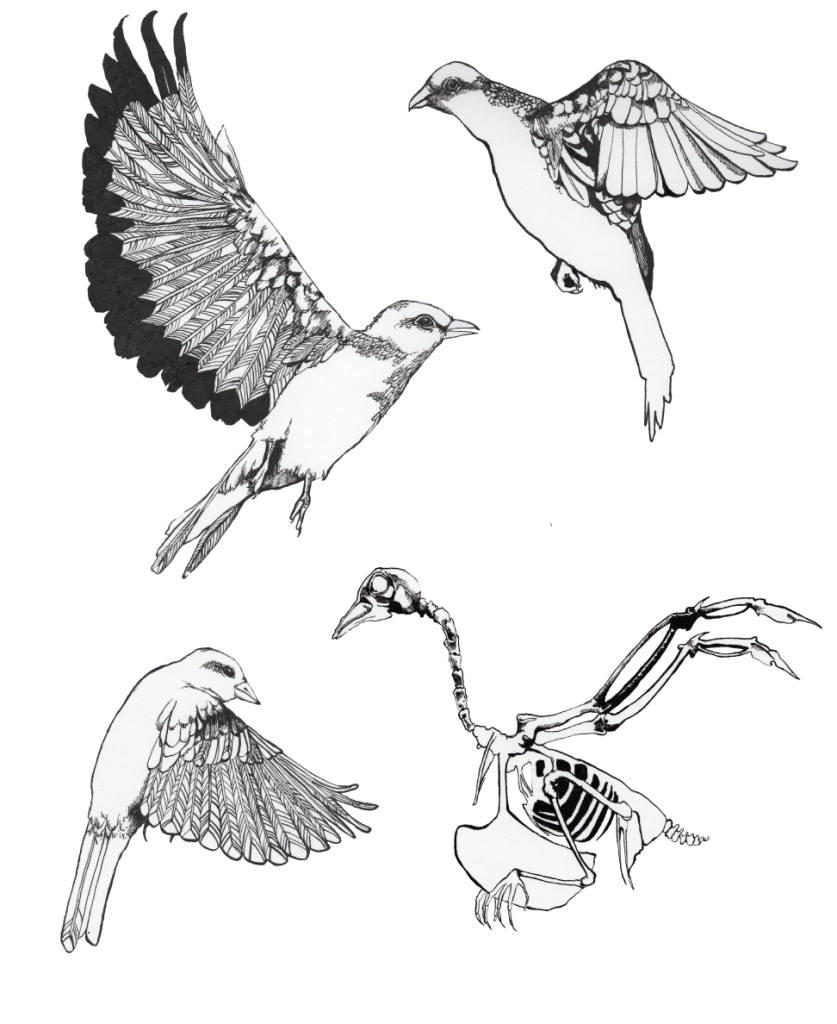 study of birds for a bigger piece u2013 feisty ink designs