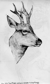 6 deer.Boston.MAy 2013